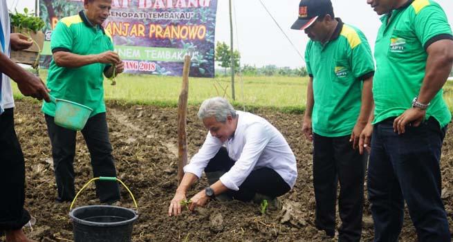 Ganjar Pimpin Kawit Tanem Tembakau Rembang